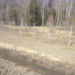 забор из сетки рабицы вдоль трасс